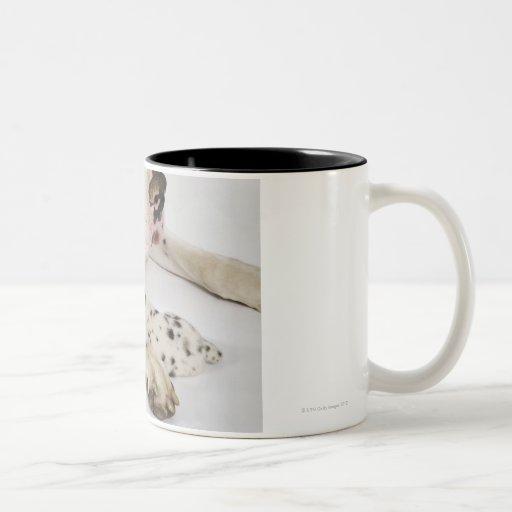 Harlequin Great Dane puppy sleeping on mother Coffee Mug