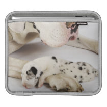 Harlequin Great Dane puppy sleeping on mother Sleeve For iPads