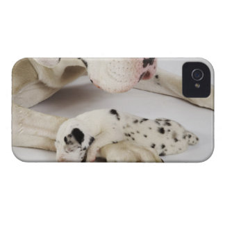 Harlequin Great Dane puppy sleeping on mother's iPhone 4 Case-Mate Case