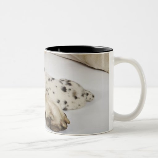 Harlequin Great Dane puppy sleeping on mother's Mugs