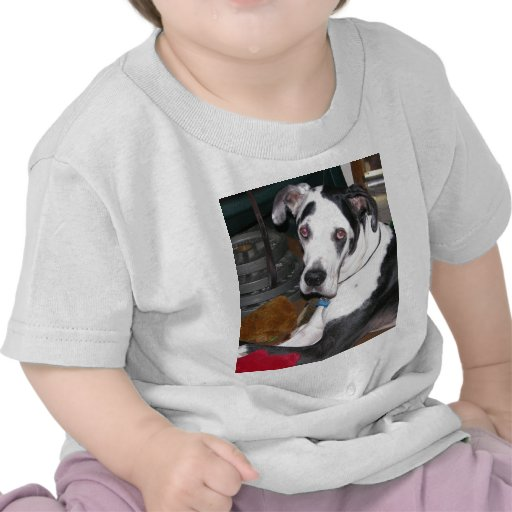 Harlequin Great Dane Tee Shirt