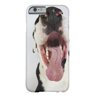Harlequin Great Dane with open mouth, close-up, Barely There iPhone 6 Case
