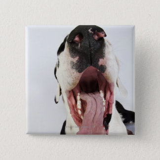 Harlequin Great Dane with open mouth, close-up, Button