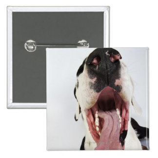 Harlequin Great Dane with open mouth, close-up, Pins