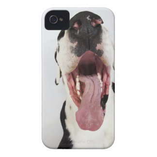 Harlequin Great Dane with open mouth, close-up, Case-Mate iPhone 4 Case