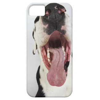 Harlequin Great Dane with open mouth, close-up, iPhone SE/5/5s Case