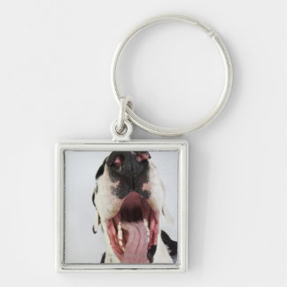 Harlequin Great Dane with open mouth, close-up, Keychain