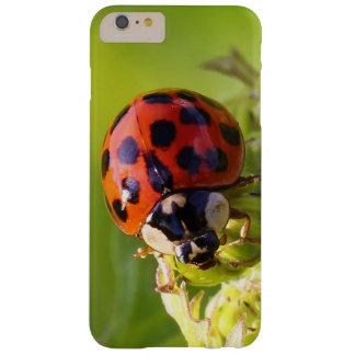 Harlequin Lady Bug Beetle Harmonia Axyridis Barely There iPhone 6 Plus Case