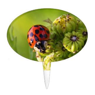 Harlequin Lady Bug Beetle Harmonia Axyridis Cake Topper