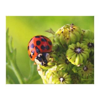 Harlequin Lady Bug Beetle Harmonia Axyridis Canvas Print