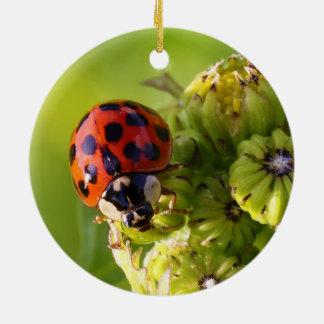 Harlequin Lady Bug Beetle Harmonia Axyridis Ceramic Ornament