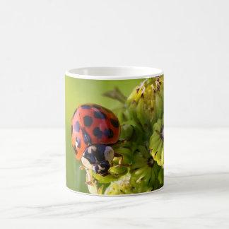 Harlequin Lady Bug Beetle Harmonia Axyridis Coffee Mug