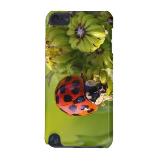 Harlequin Lady Bug Beetle Harmonia Axyridis iPod Touch (5th Generation) Cover