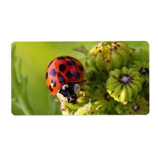Harlequin Lady Bug Beetle Harmonia Axyridis Label