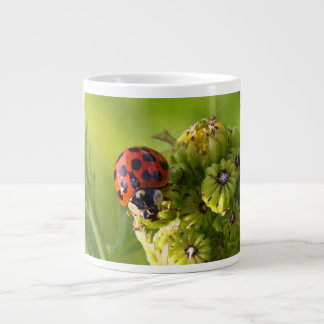 Harlequin Lady Bug Beetle Harmonia Axyridis Large Coffee Mug