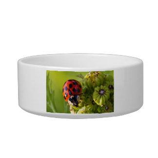 Harlequin Lady Bug Beetle Harmonia Axyridis Cat Bowl