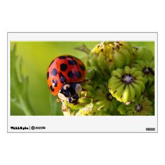 Harlequin Lady Bug Beetle Harmonia Axyridis Wall Decal