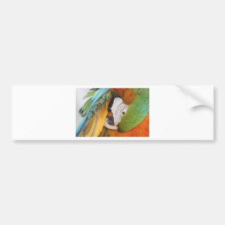 Harlequin macaw bumper sticker