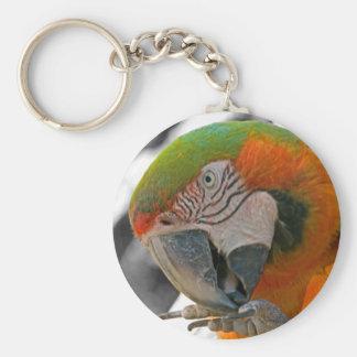 Harlequin Macaw Foot Key Holder Key Chains