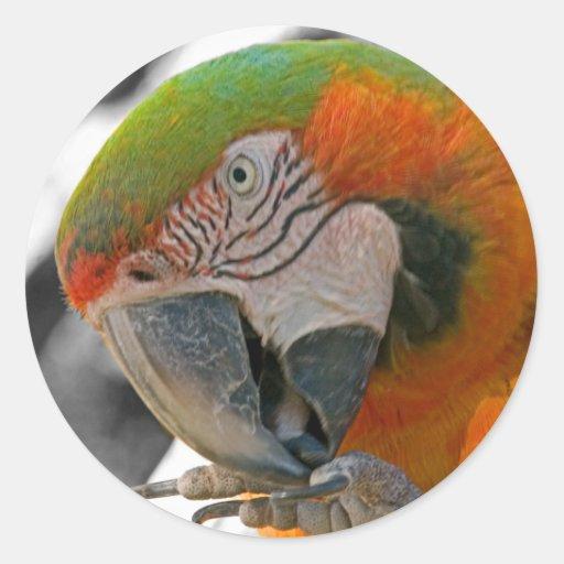 Harlequin Macaw Foot Sticker