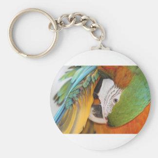 Harlequin macaw keychain