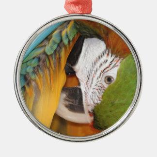 Harlequin macaw metal ornament