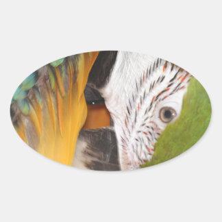 Harlequin macaw oval sticker