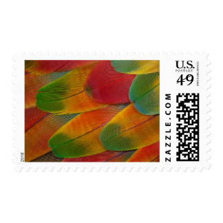 Harlequin Macaw parrot feathers Stamp