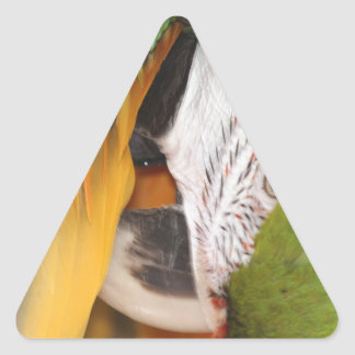 Harlequin macaw triangle sticker