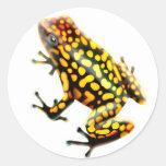 Harlequin Poison Frog Sticker