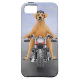 Harley que monta Labrador iPhone 5 Funda