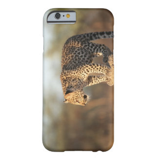 Harnas Wildlife Sanctuary, Namibia Barely There iPhone 6 Case