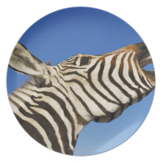 Harnas Wildlife Sanctuary, Namibia, Southern Dinner Plate