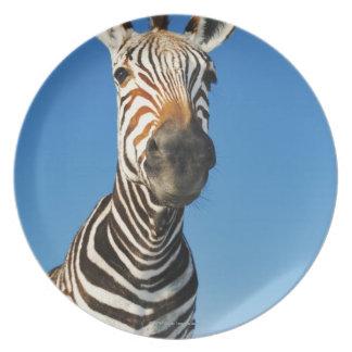 Harnas Wildlife Sanctuary, Namibia, Southern Plate