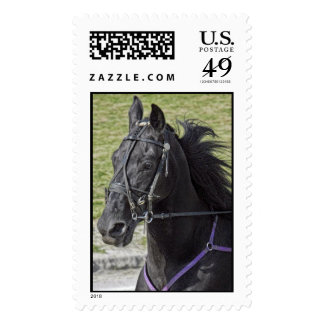 Harness Horse Close Up Postage Stamp