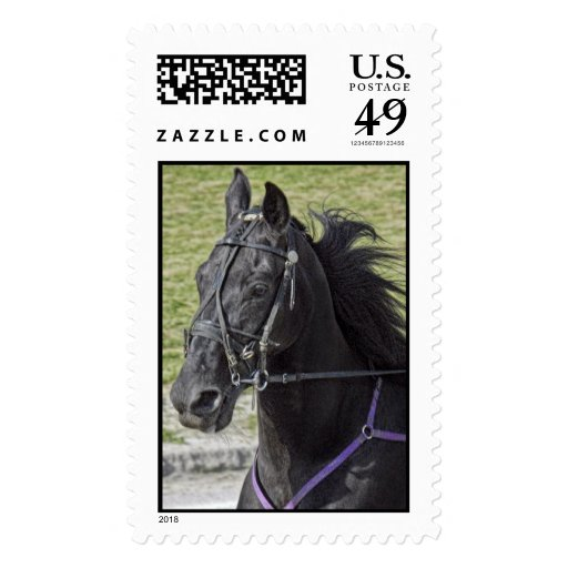 Harness Horse Close Up Postage Stamps