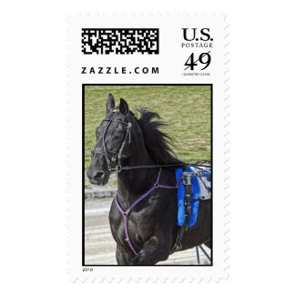 Harness Horse Stamp