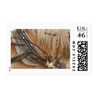 Harness Postage Stamps
