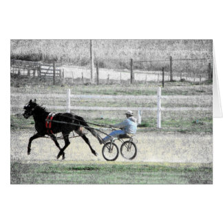 Harness Racing Card
