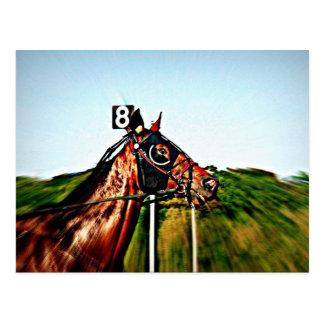Harness Racing Post Card