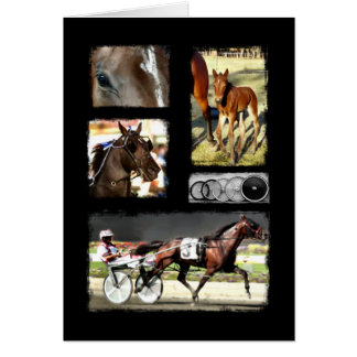 Harness Racing Sport Greeting Cards
