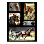 Harness Racing Sport Post Card