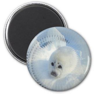 Harp Seal 2 Inch Round Magnet