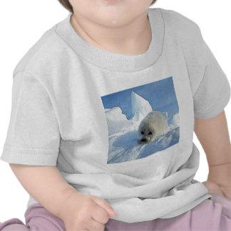 Harp Seal 2 Tshirts