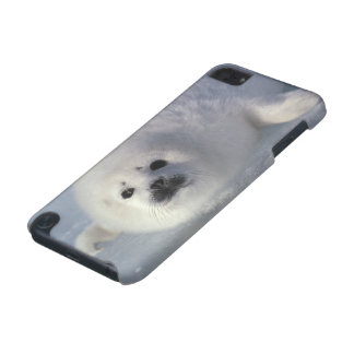Harp seal Phoca groenlandica) A week-old harp iPod Touch 5G Cover