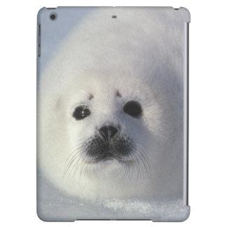 Harp seal Phoca groenlandica A week-old harp Case For iPad Air