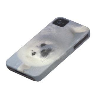 Harp seal Phoca groenlandica) A week-old harp iPhone 4 Case