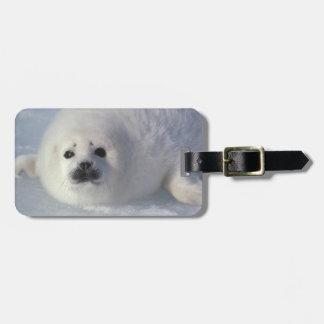 Harp seal Phoca groenlandica) A week-old harp Luggage Tags