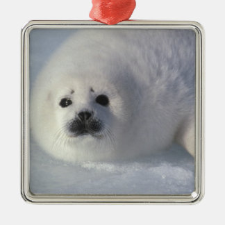 Harp seal Phoca groenlandica) A week-old harp Metal Ornament
