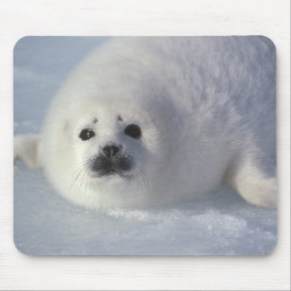 Harp seal Phoca groenlandica) A week-old harp Mouse Pad